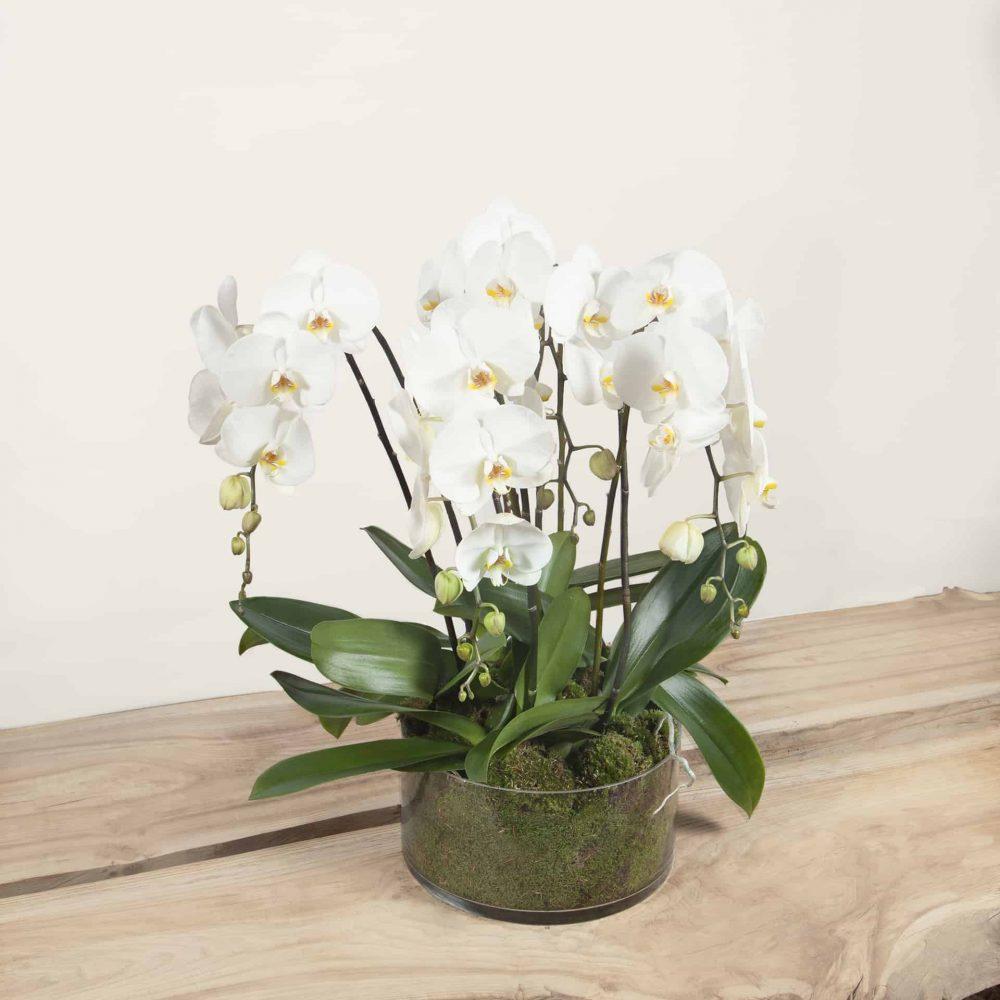 Orchidées cascades